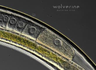 Wolverine – Machina Viva (Sensory Records)